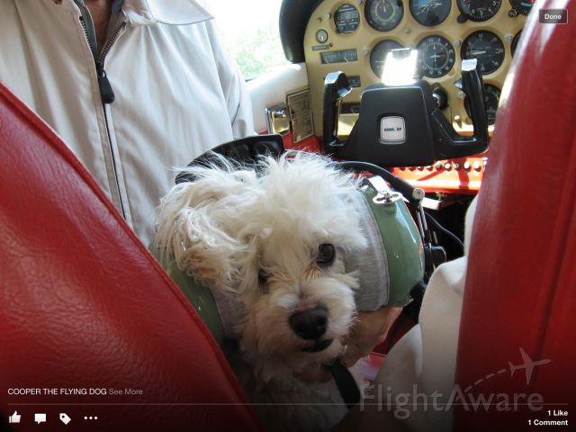 N8923V — - Pilot Cooper getting ready for a flight.