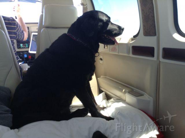 Beechcraft Bonanza (36) (N36CN) - Favorite copilot Abby
