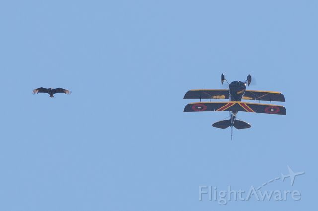 Piper Cherokee (N690AB) - At acrobatics competition at Llano Municipal Airport (with black vulture).