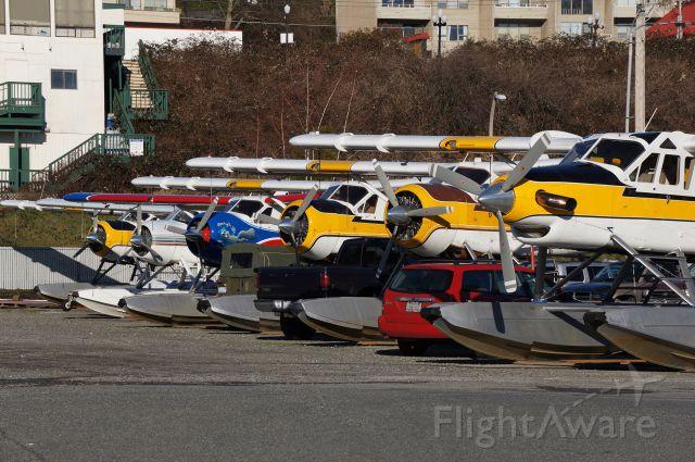 de Havilland Dash 8-400 (DHC3) - An extensive lineup of DeHavilland Beavers on the ramp at Kenmore Air Harbor Inc. seaplane base