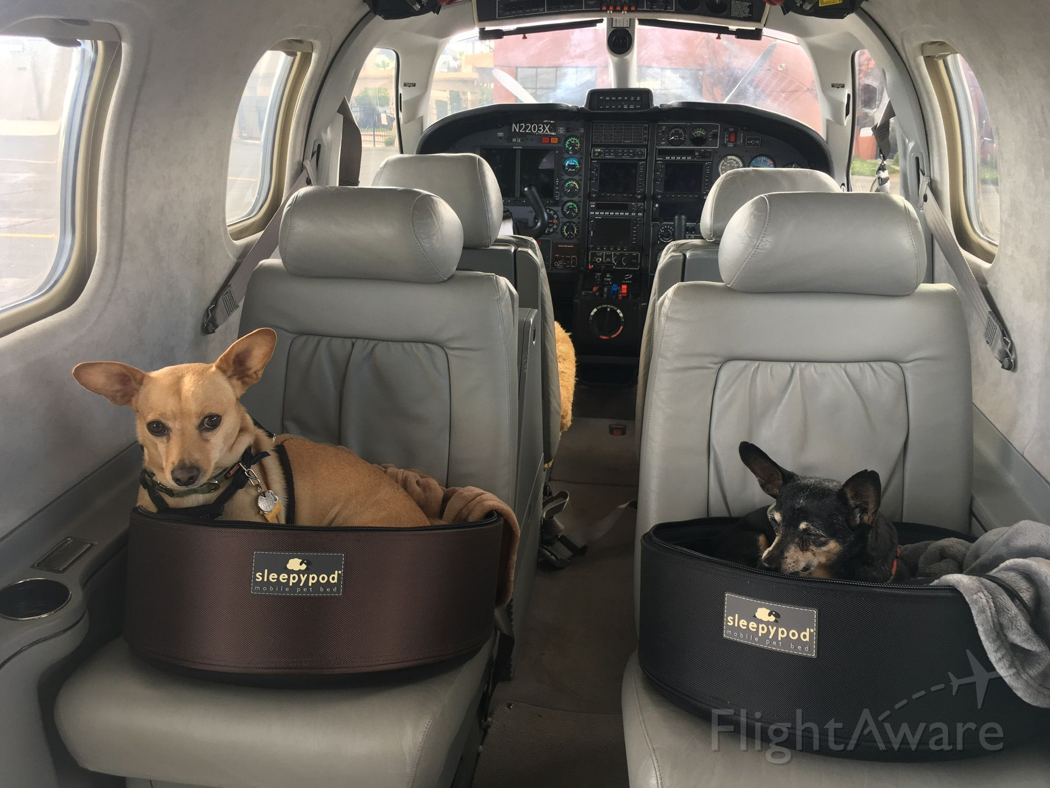 Socata TBM-700 (N2203X) - Two of the most spoiled little mutts in the world.
