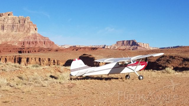 Cessna 170 (N2274D)