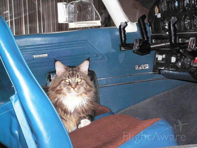 Piper Cherokee (N55774) - Anakin ready for boarding