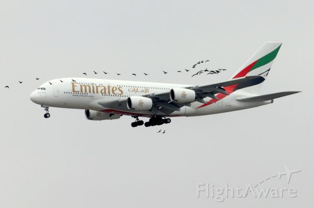 Airbus A380-800 (A6-EEH) - 'Emirates 201 Super' from Dubai arriving to heavy bird activity on 22L