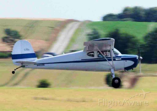 Cessna 140 (N4229N)