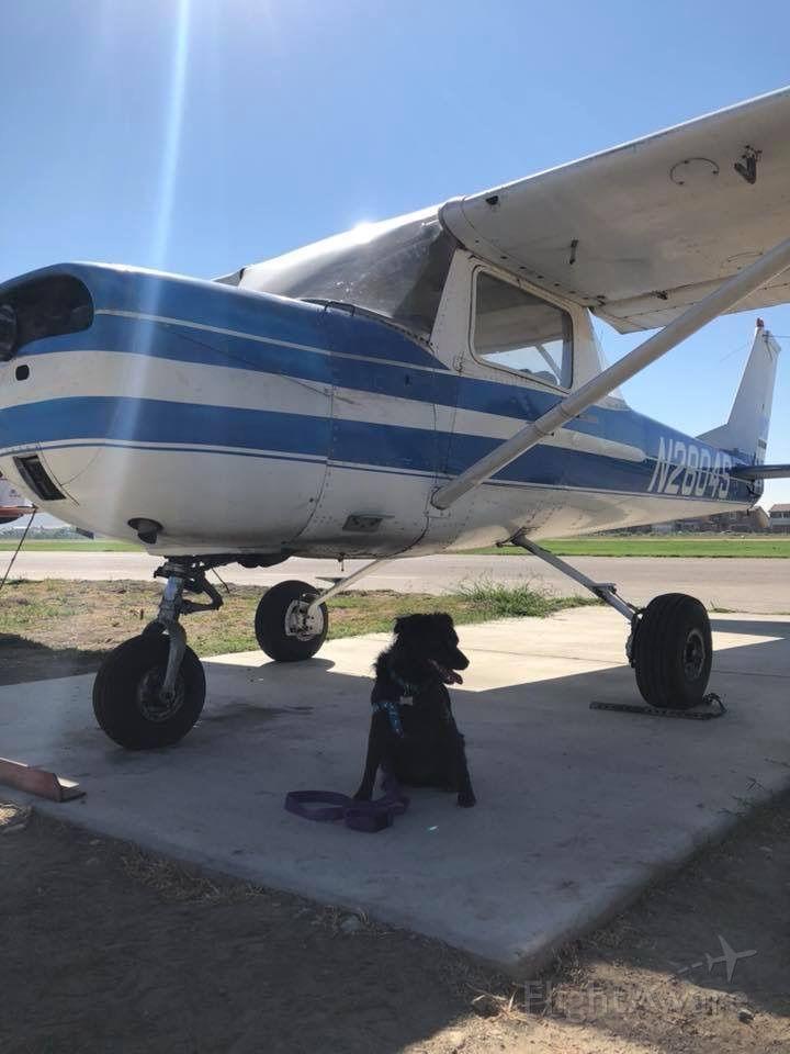 Cessna Commuter (N2804S) - Dexter guarding his ship