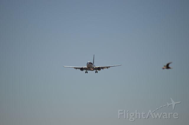 BOEING 737-600 — - Bird meet Bird..