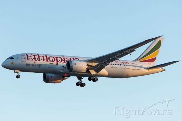 Boeing 787-8 (ET-AOV) - Ethiopian Airlines - Boeing 787-8 Dreamliner<br />Registration: ET-AOV<br /><br />Lome (LFW) / São Paulo (GRU)<br /><br />Foto tirada em: 01/04/2017<br />Fotografia: Marcelo Luiz