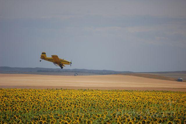 N1012T — - Air Tractor dusting sunflower feild in N.D.