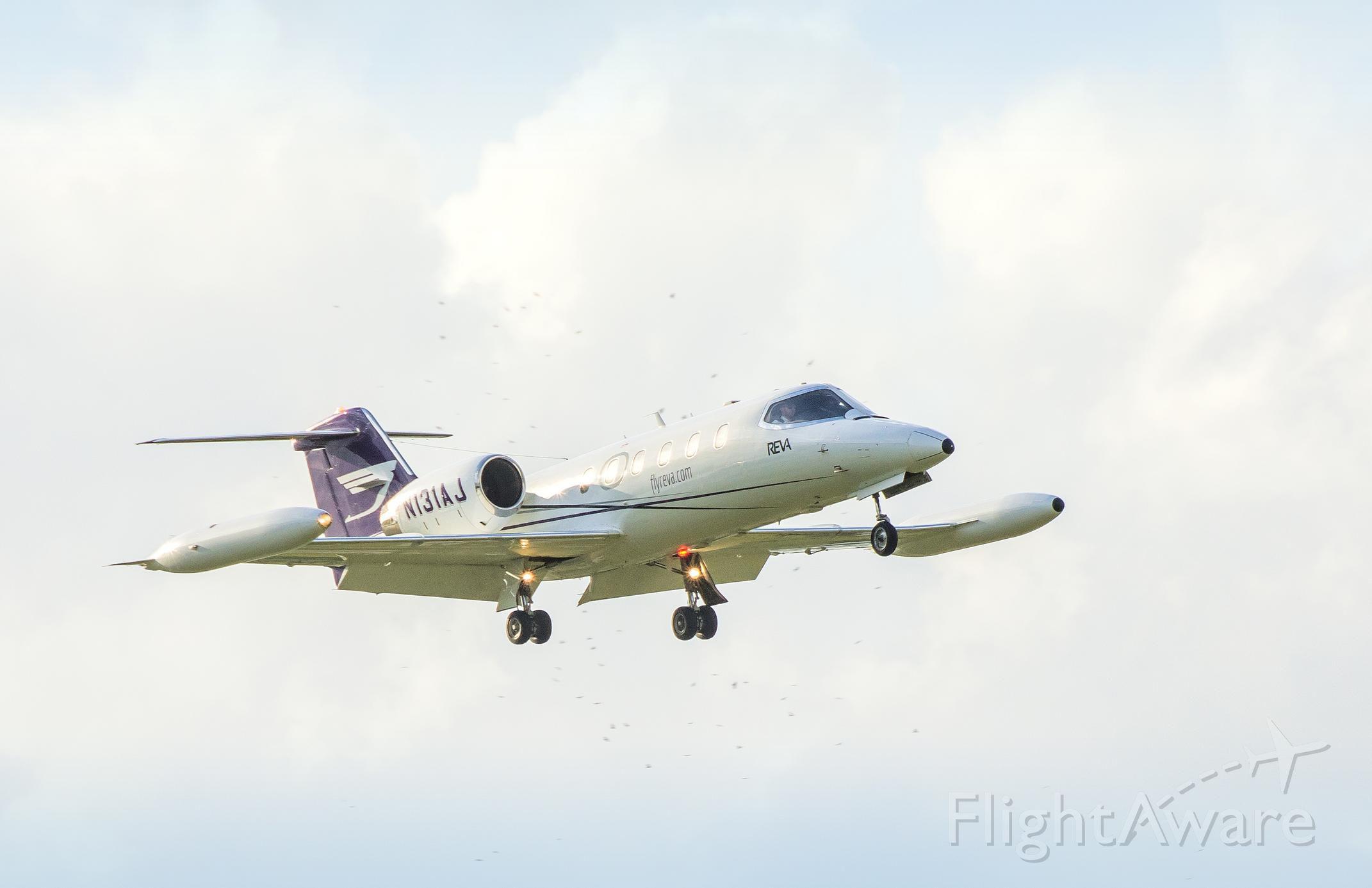Learjet 35 (N131AJ) - Birds in the landing approach area.