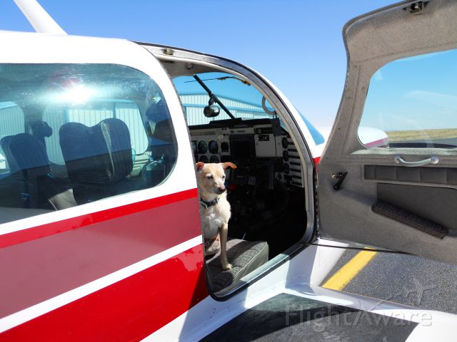 N252L — - Enzo contemplates his flight