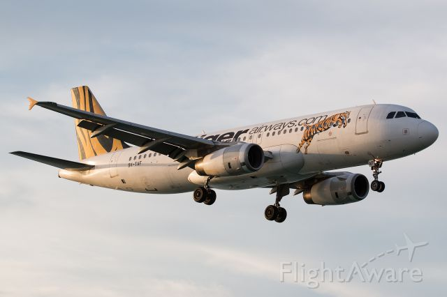 Airbus A320 (9V-TAF) - late arrival in the evening sun (06.12.2014)