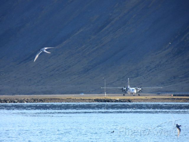Fokker Maritime Enforcer (TF-JMM) - TF-JMM, a Flugfelag Islands Fokker 50, in preparation for take-off amidst extensive bird activity (I challenge you to spot all of them) - Isafjordur (BIIS) - May 2012
