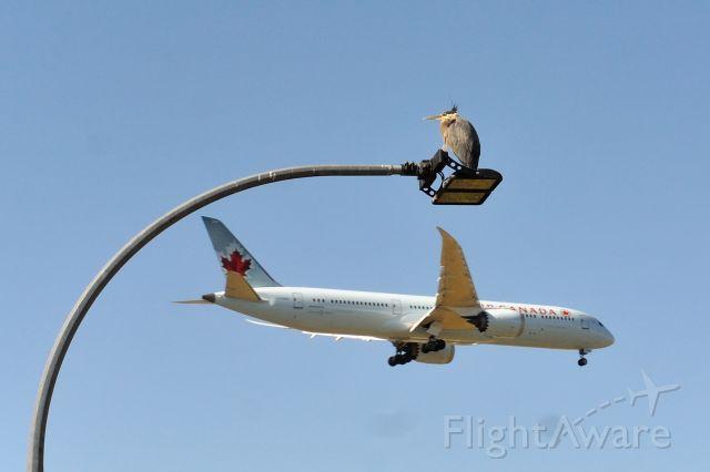 Boeing 787-9 Dreamliner (C-FNOI) - birds