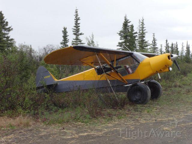 Piper L-21 Super Cub (N5988Z) - A classic bush plane waiting to explore the Denali region.