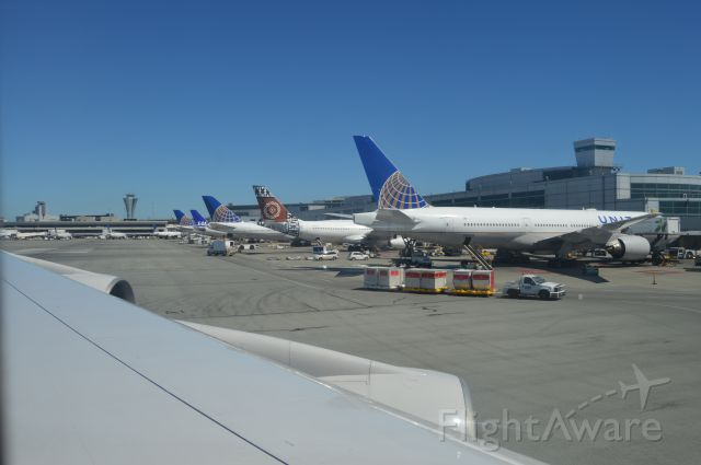 — — - International Terminal at SFO! Arrival from Frankfurt