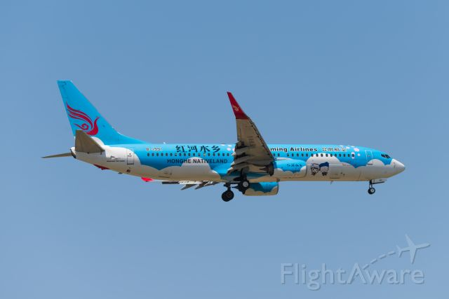 Boeing 737-800 (B-1991) - Kunming Airlines Honghe Nativeland livery landed at ZSPD -19.5.2