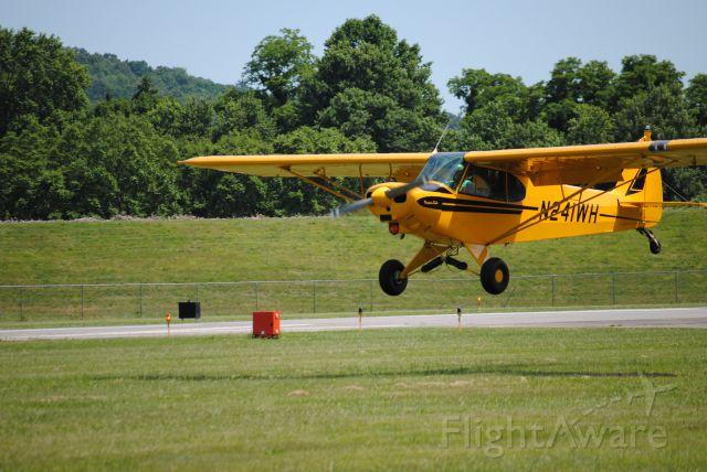 Piper L-21 Super Cub (N241WH)