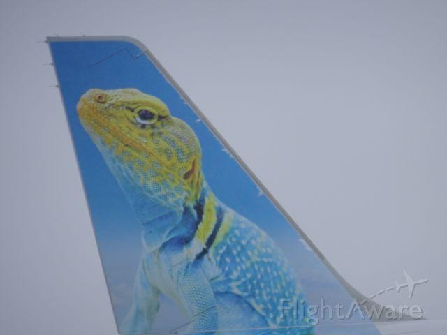 N310FR — - Sunny the Collard Lizard