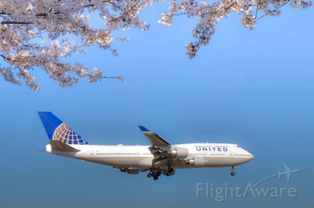 Boeing 747-400 (N171UA) - Cherry blossoms in full bloom,RW16R,NRT