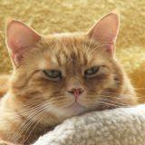 lelandscats