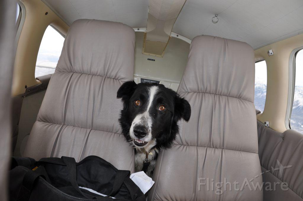 Piper Cherokee Arrow (N3588M) - Pilots-N-Paws,  Flying