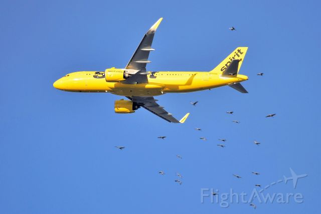 N932NK — - Being escorted by a squadron (flock) of Sandhill Cranes!