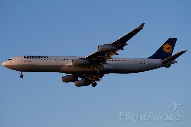 Airbus A340-300 (D-AIGZ)