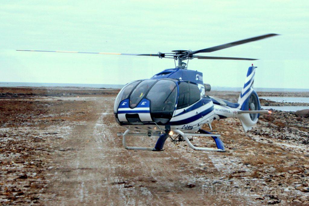 Eurocopter EC-130 (C-GSDA) - Eurocopter 130B4 landing next to our Tundra Buggy