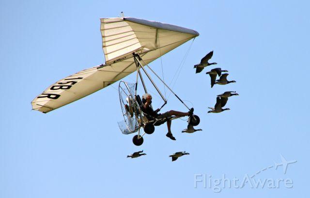 N15BR — - ULM pendulaire : vol en patrouille avec des oies...