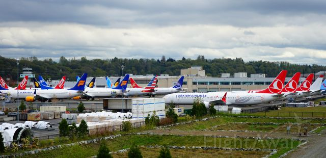 Boeing 737 MAX 8 (TC-LYB) - While visiting the airport museum at Boeing Field, I noticed a group of grounded 737 MAX planes in tight storage formation at the airport as I was leaving.  The Turkish Airline plane was closest.  It hurts to see that many aviation machines sitting idle.  Safety first!