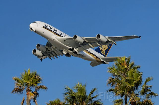 Airbus A380-800 (9V-SKG) - Leaving Southern California – a Singapore Airlines A380 super-jumbo ascending above the palm tree tops after takeoff from the Los Angeles International Airport, LAX, Westchester, Los Angeles, California