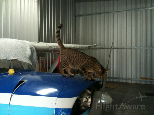— — - Cessna 150-B at KHUF well-guarded from mice by Houdini the hangar cat..
