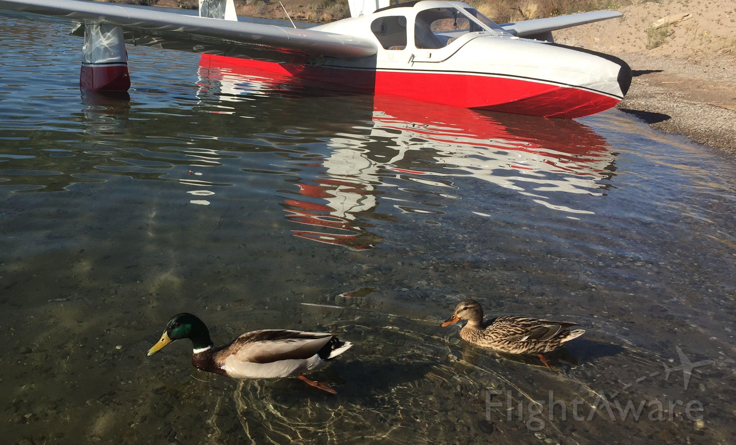 LAKE LA-200 (N7615L) - Three water birds, Lake Havasu, 2017