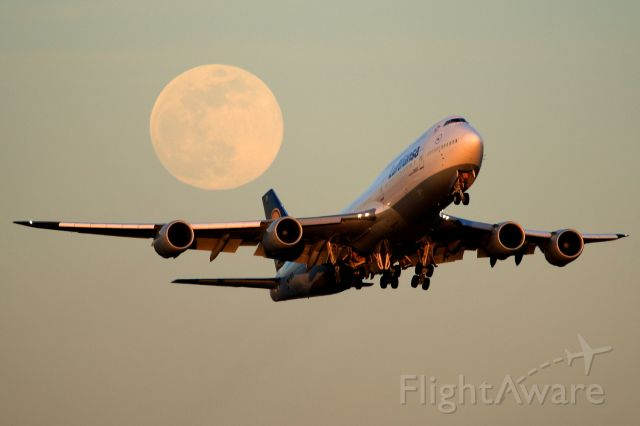 BOEING 747-8 (D-ABYD)