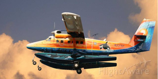 De Havilland Canada Twin Otter (N77TF) - The Nautical Otter, Taking flight for another exciting destination!
