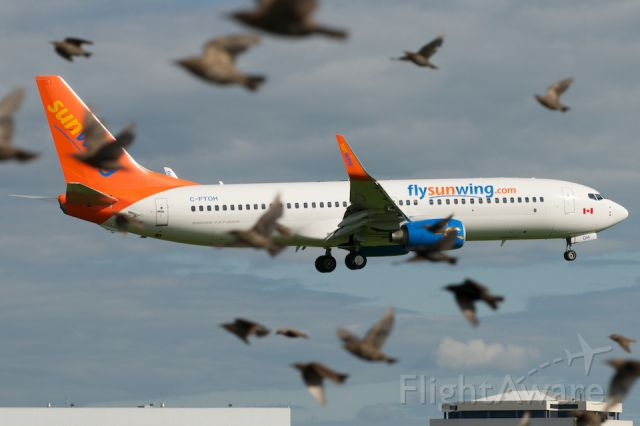 Boeing 737-800 (C-FTOH) - The Birds...